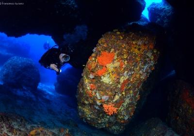 Agenzia/operatore Turistico Blue Diving Ustica